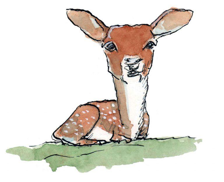 Deer, Jan Visser Zoo Foundation