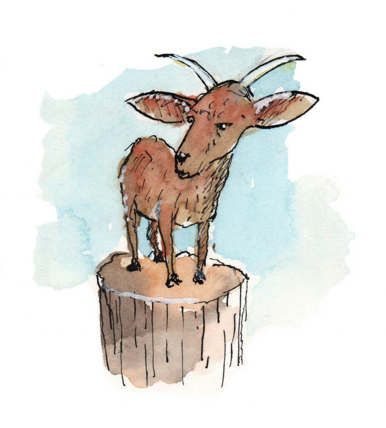 Goat, Jan Visser Zoo Foundation