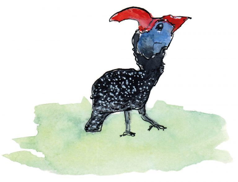 Bird of Paradise, Jan Visser Zoo Foundation