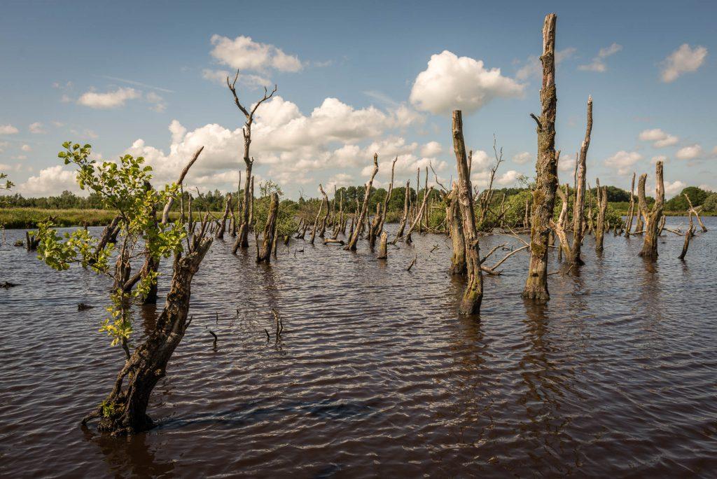 Bomen in een Meer, Friesland